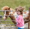 201/366 Matching Manes - 366 Project 2 - 2016 (dorsetpeach) Tags: horse pony mane windy wind fancysfarm portland england 366project aphotoadayforayear 365 366 2016 second365project
