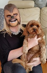 Little Wookiee.  Maggie's face is priceless. I'm in Melbourne at the moment visiting my sister. Her beautiful dog has always reminded me of Chewbacca. So it was only fitting I brought my mask. She was not amused. This photo makes me laugh so much. Taken w (Celebrating over 2 million views. Thank you) Tags: chewbacca wookiee dogs joy smiles laughter underwhelmed hysterical melbourne visiting sister fun happy look expression priceless mobile