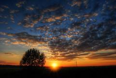 Zalazak (Sareni) Tags: sareni serbia srbija vojvodina banat juznibanat alibunar polje poljana livada field sunset sundown zalzak tree drvo oblaci nebo sunce clouds sky sun zraci light svetlost evening boje colors hdr highdynamicrange photomatix summer leto july 2016 twop