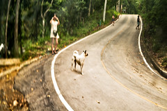 Behind them followed the dog (Jamie Langford) Tags: thailand chiangmai mountains
