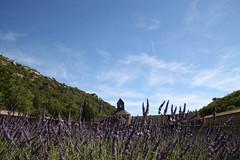 provence. (dalilacapelli) Tags: france francia provence provenza lavande lavanda abbaye senanque sky summer trip roadtrip holiday marseille marsiglia sun hot