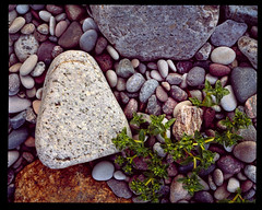 It's growing II 4x5 - Velvia 100 (magnus.joensson) Tags: sweden swedish spring stenshuvud national park 4x5 large format linhof technikardan 45 fujinon 125mm fuji velvia 100 81b hasselblad flextight x5 e6