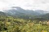 Kannan Devan Hills Plantations (Hari K Patibanda) Tags: chinnar kerala kundladam munnar thekkady topstation vagamon