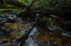 sticks and stones (RhinoSkin) Tags: creek cedar tree fern moss rocks