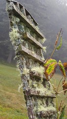Lean a little to the left (xzna) Tags: gardenfence woodenfence moss fog leaning wood