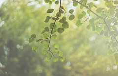 afternoon delight (rockinmonique) Tags: 52in52 leaves tree light green yellow bokeh fresh mystical magical swirly moniquew canont6s helios442 copyright2016moniquewphotography