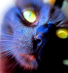 My sweet, holographic dream cat (TejaO) Tags: cat blackcat rainbow holographic photoshop