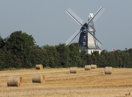 Windmühle Borigsem