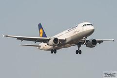 Lufthansa Airbus A320-211 D-AIPL Ludwigshafen am Rhein (888359) (Thomas Becker) Tags: lufthansa dlh airbus a320211 a320200 a320 daipl ludwigshafenamrhein staralliance msn 94 081289 fwwdr 200290 khalifaairways 7tvko lh209 dresden drs fraport flughafen airport aeroport aeropuerto aeroporto fra eddf frankfurt nordwestlandebahn plane spotting aircraft airplane avion aeroplano aereo 飞机 vliegtuig aviao аэроплан samolot flugzeug germany deutschland hessen rheinmain nikon d800 nikkor 70200 f28 vrii fx raw gps aviationphoto 160310 arrival geotagged geo:lat=500351571 geo:lon=84900337 aero:airline=dlh aero:man=airbus aero:model=a320 aero:series=200 aero:tail=daipl aero:airport=eddf