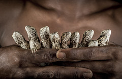 _53A2193 (Global Wildlife Conservation) Tags: caribbean criticallyendangered cycluracollei jamaica jamaicaniguana portlandbight portlandbightprotectedarea protectedarea babies conservation endangered extinction hatchling lizards recovery reptiles success threatened
