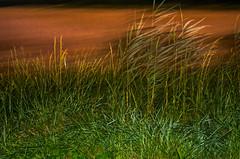 LES TERRES ROUGES (zventure,) Tags: arbre abstrait abstract arles arbustes herbes hautelumire crpuscule fil flou fort france feuilles flore vert rouge