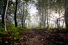 Forest Trail In The Morning Mists (TheNovaScotian1991) Tags: victoriapark path autumn fallenleaves shadow trees forest colchestercounty tokina1116mmdxii nikond3200 ultrawideangle mist fog morning morninglight maritimes canada novascotia ferns trail truro dirt