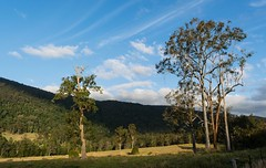 Numinbah Valley (dustaway) Tags: landscape cloudshadow bluesky trees paddocks nerangrivervalley numinbahvalley sequeensland queensland australia australianlandscape spring