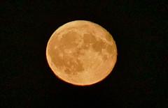 Harvest Moon (Bucky-D) Tags: fz1000 moon moonrise harvestmoon nikhdrefexpro2 lunar fullmoon