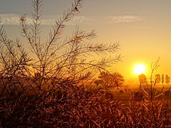 Coming your way (Tobi_2008) Tags: sonnenaufgang sunrise himmel sky sonne sun landschaft landscape natur nature sachsen saxony deutschland germany allemagne germania