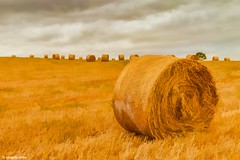 Hay bales (Sougata2013) Tags: barossavalley adelaide southaustralia australia haybales landscape nature nikond3200