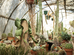 (gwoolston) Tags: cactus greenhouse green socal california palmsprings desert garden