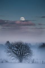 Moon (Torehegg) Tags: winter moon snow tree norway night nightshot moonlight nightsky måne winternight grimstad fevik månelys