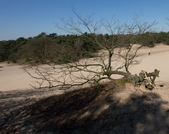 Wandeling Drunense Duinen-5 (vdrpijl) Tags: april drunenseduinen 2013
