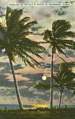 Moonlight on the Gulf of Mexico (St. Petersburg Museum of History) Tags: moon history nature water vintage postcard historic palmtree archives moonlight stpetersburgflorida stpetersburgmuseumofhistory stpetersburgmuseumofhistoryarchives