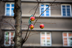 Appletree?? ;) (nemi1968) Tags: vienna wien city windows red building tree apple window yellow canon apples appletree markiii