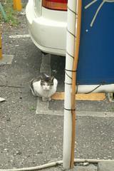 cat (t-miki) Tags: cat tokyo shibuya fujifilm    elmar pro160c ernstleitz leicac