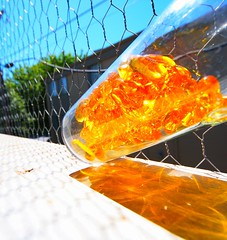 Day 79 (SXN) Tags: california ca orange glass digital canon eos 350d rebel xt iso100 amber angle wide naturallight cage fisheye note cap squid glowing pills davis tilt 2008 gel chickenwire lean 10mm sxn img3011 piercesoracco 2013piercesoracco piercesoraccocom