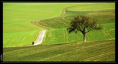 walk, dont run (eLKayPics) Tags: tree field lines germany landscape deutschland hessen pentax path walk feld run explore tele jogging landschaft taunus rennen baum wandern feldweg weg hesse windingroad idstein k7 linien kurven explored explore2 teleobjektiv rd fieldpath rheingautaunuskreis idsteinerland elkaypics niederseelbach