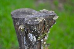 Cut Wood Tree Green Background ([visual media]) Tags: wood brazil plants tree green mushroom grass horizontal brasil dark moss flora saopaulo bokeh cut background gray lawn fungi growth fungus stump vegetation trunk paulo sao