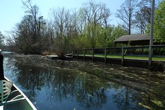 Bennett's Creek Floating Dock - Gatesville, NC (meckleychina) Tags: statepark nc dock paddle northcarolina canoe carolina gatesville bennettscreek merchantsmillpond