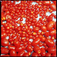 Pomodori (Giorgio Verdiani) Tags: red sun macro 6x6 mediumformat tomato many flash tube bronica konica extension sole tomatos rosso pomodori vivitar tubo pomodoro sqa 400asa 220 400iso 80mm rollfilm centuria tanti zenza rullo medioformato zenzanon estensione