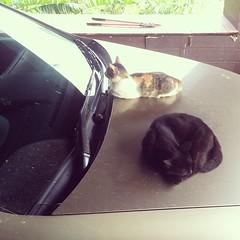 ข้ออ้างของการไม่ล้างรถคือ ไม่อยากรบกวนเวลานอนของแมว #จริงๆคือซกมก #หมอขี้เกียจ #โยนให้แมว