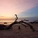 Jekyll Island, GA Driftwood Beach