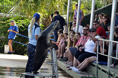 In charge (Roving I) Tags: tourism animals australia trainers tricks cameras nsw newsouthwales attractions performances coffsharbour furseals familiies coffscoast marinemagic