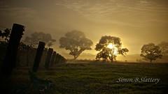 Misty Morning (Valley Imagery) Tags: mist fog sunrise vineyard australia southaustralia lyndoch explored