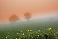 mists spring (Tizi@no56 (painting with light)) Tags: flowers trees sunset sky panorama orange verde green primavera yellow alberi landscape spring tramonto lawn giallo cielo fiori nebbia prato mists