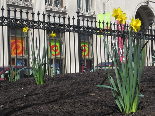 daffodils and the Pratt Library - closer view