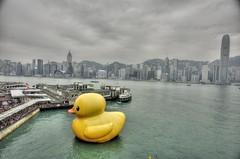 Giant Duck in Hong Kong (mozartet) Tags: hongkong 20mm hdr giantduck d700