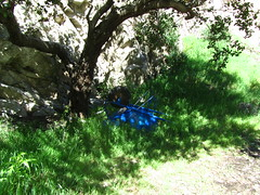 Blue Wheelbarrow (fordsbasement) Tags: tool angelesnationalforest anf