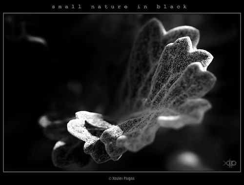 small nature in black · #05