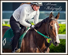 Mott Trainee (EASY GOER) Tags: horses horse ny newyork slr sports racetrack canon track state action tracks racing course flats event 7d athletes races sporting thoroughbred equine thoroughbreds belmontpark equines sportofkings