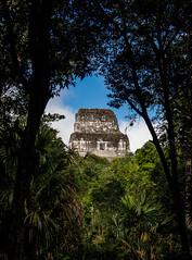 Templo IV (The Cookiemonster) Tags: pyramid maya guatemala jungle tikal petn