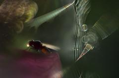 a lightbulb moment (pete ware) Tags: macro composite photoshop insect fly spiderweb helios nikond7000 peteware threeextensiontubesandaheliosmakeaverybigrig softinparts