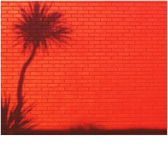 shadows in paradise (Torquay Palms) Tags: torquay torbay tor bay the english riviera south devon devons beautiful westcountry west country uk united kingdom gb great britain england wall red shadow palm tree cordyline australis caustralis cabbage light canon eos m ef 1855mm