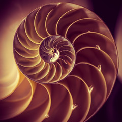 Courbes (Coeur tranger) Tags: nautilus concha shell coquille courbes curvas curves cefalpode cephalopod cphalopode mollusque espiral logartmica logarithmic spiral
