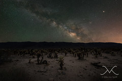 Cholla Cactus Garden Milky Way (Mike Ver Sprill - Milky Way Mike) Tags: chollacactusgarden milkyway milkywaymike michaelversprill mikeversprill mv astrophotography astronomy nightsky longexposure starryskystacker dark sunset cholla cactus garden clouds cloudy storm storms brewin landscape panorma pano panormaic california joshua tree national park cali travel 29 springs nikon d800 1424 stack best greatest photography fine art amazing camping road trip explore gloomy gloom dramatic drama outdoor sky sea cloud coast shore ocean water serene hill mountainside