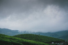 DSC01590 (Sujith Ninan) Tags: travel photography sony sonya6000 35mm 16mm kerala india munnar landscapes monsoon vsco asia friends digital flower sky tree green mountians portrait family roadtrip road car bw new me