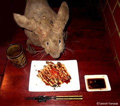 Dr. Takeshi Yamada and Seara (Coney Island Sea Rabbit) at the Sake Japanese sushi buffet restaurant in Brooklyn, NY on March 27, 2016.  20160527Fri DSCN6209=3035pmC. spicy salmon skin salad (searabbits23) Tags: searabbit seara takeshiyamada  taxidermy roguetaxidermy mart strange cryptozoology uma ufo esp curiosities oddities globalwarming climategate dragon mermaid unicorn art artist alchemy entertainer performer famous sexy playboy bikini fashion vogue goth gothic vampire steampunk barrackobama billclinton billgates sideshow freakshow star king pop god angel celebrity genius amc immortalized tv immortalizer japanese asian mardigras tophat google yahoo bing aol cnn coneyisland brooklyn newyork leonardodavinci damienhirst jeffkoons takashimurakami vangogh pablopicasso salvadordali waltdisney donaldtrump hillaryclinton endangeredspecies save