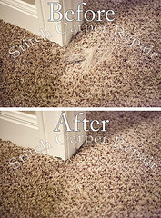 44 Carpet repair dog pet damage patch in bedroom Austin Round Rock Cedar Park Manor Bee Cave San Marcos (Carpet Repair) Tags: austincarpetrepair cedarparkcarpetrepair roundrockcarpetrepair pflugervillecarpetrepair sanmarcoscarpetrepair westlakehillscarpetrepair wimberleycarpetrepair suncitycarpetrepair driftwoodcarpetrepair georgetowncarpetrepair drippingspringscarpetrepair kylecarpetrepair laketraviscarpetrepair lakewaycarpetrepair leandercarpetrepair manorcarpetrepair onioncreekcarpetrepair bartoncreekcarpetrepair budacarpetrepair carpetrepair repaircarpeting carpetrepaircost carpetrepairservice carpetrepaircompanies professionalcarpetrepair carpetdamagerepair carpetrepairspecialist repairingcarpetdamage cancarpetberepaired canyourepaircarpet carpetrepairaustintx fixingcarpet carpetfixing fixcarpet carpetpatching patchingcarpet carpetpatch patchcarpet carpetpatches patchacarpet carpetpatchingcost carpetpatchingservice carpetrepairpatch repaircarpets carpetpatchrepair canyoupatchcarpet repairingcarpetpatch carpet patching patch patchwork repair austin kyle lakeway buda cedarpark roundrock sanmarcos beecave petdamage carpetpetdamage snag tear torn fraying frayed unraveling hole dog cat pet damage