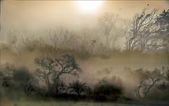 Automne prfigurent (Alda Cravo Al-Saude) Tags: trees silence poem walk wonderland